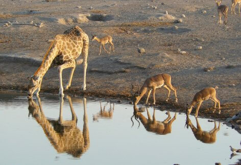 Etosha National Park, Namibia - Famous Destinations